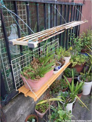 新旧植木鉢用棚