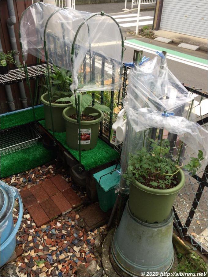 家庭菜園の雨対策