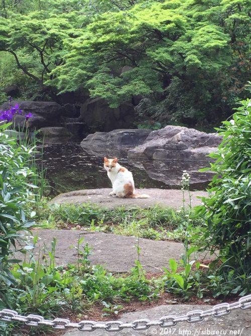 池のほとりのネコ