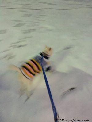 保護犬あかね雪大好き