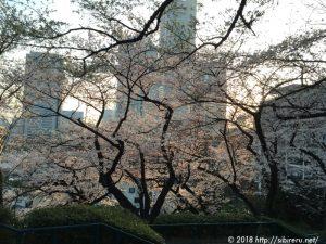2018年桜とランドマークタワー